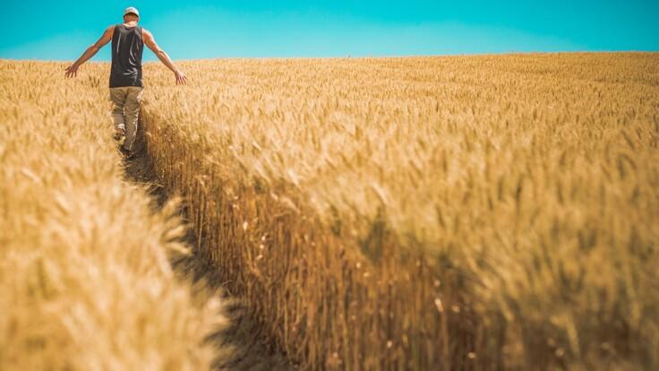 У Украины плохо с урожаем: аграрий назвал три угрозы