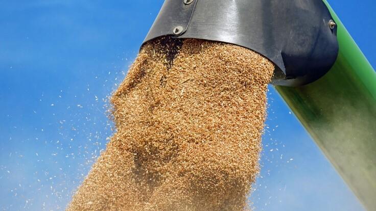 """""""Рассчитываем на потерю экспорта"""": аграрии обещают Украине проблемы"""