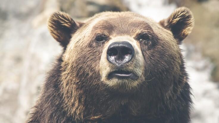 Продаж тварин за борги: в Мінюсті пояснили, що буде з левами і ведмедями