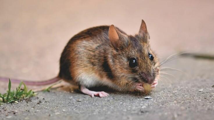 """Из Госрезерва пропали тысячи вагонов зерна: у Авакова объяснили слова о """"мышах"""""""