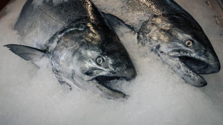 Заморожена риба на ринках - експерти розповіли, в чому небезпека