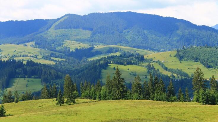 Ліс ні до чого - в Держлісагентстві не вважають вирубки причиною потопу