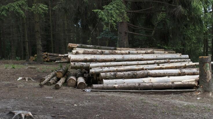 """""""Официальные браконьеры"""": экс-чиновник назвал виновных в незаконных вырубках"""