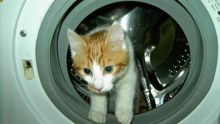 Обязательна одна вещь - эксперт посоветовал, как правильно купить стиральную машину