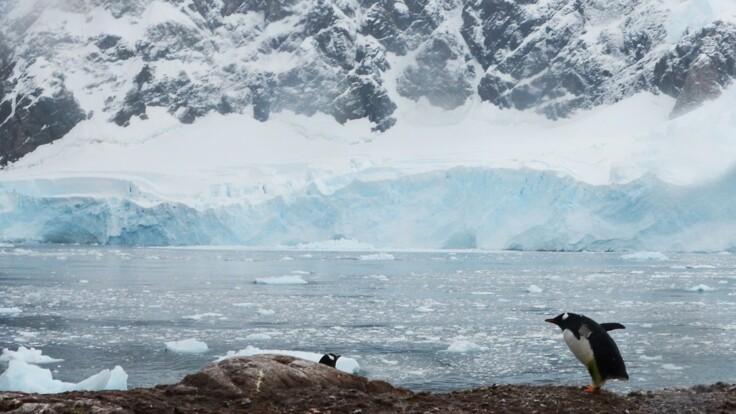 Коронавирус добрался до Антарктиды: что происходит на украинской станции