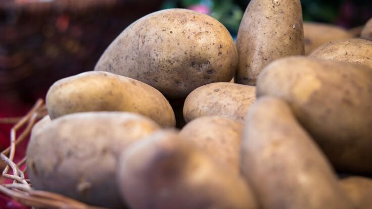 В Украине дорожают овощи — эксперт рассказал, когда цены пойдут вниз